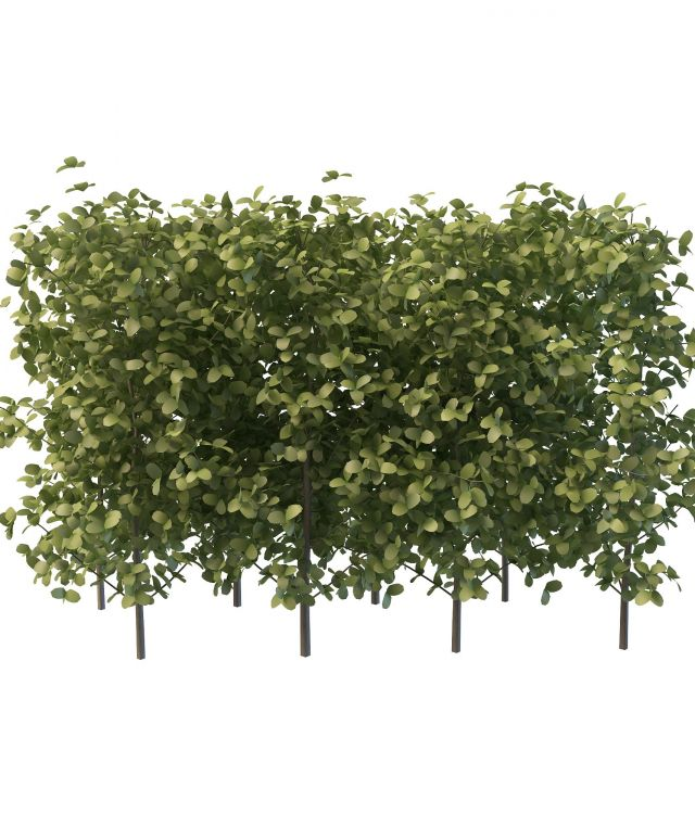 Hedges for landscaping 3d model 3ds max files free for Garden design in 3ds max