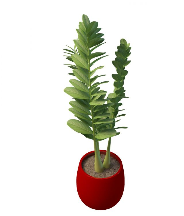 Potted Plant With Round Leaves 3d Model 3ds Max Files Free