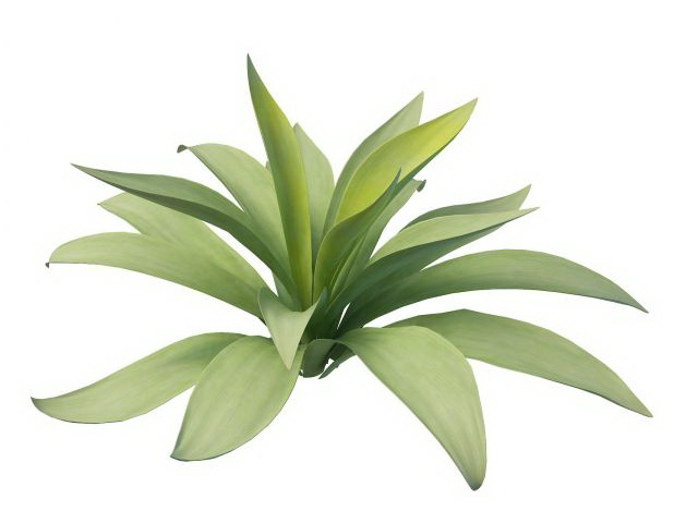 Agave Plant 3d Model 3ds Max Files Free Download