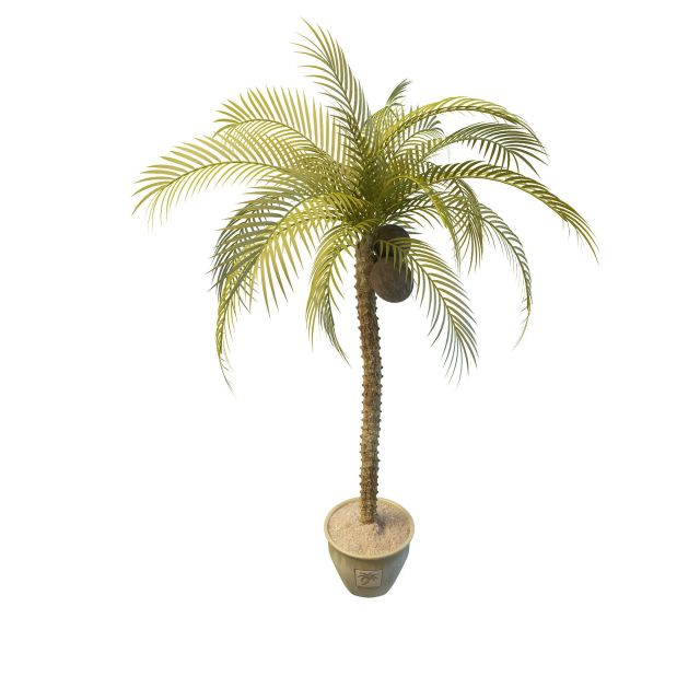 Potted coconut tree 3d model 3ds max files free download - modeling