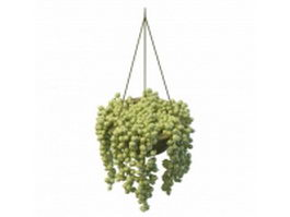 Hanging succulent planter 3d model