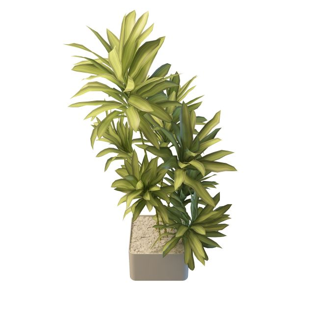 Long Leaf Indoor Plants 3d Model 3ds Max Files Free
