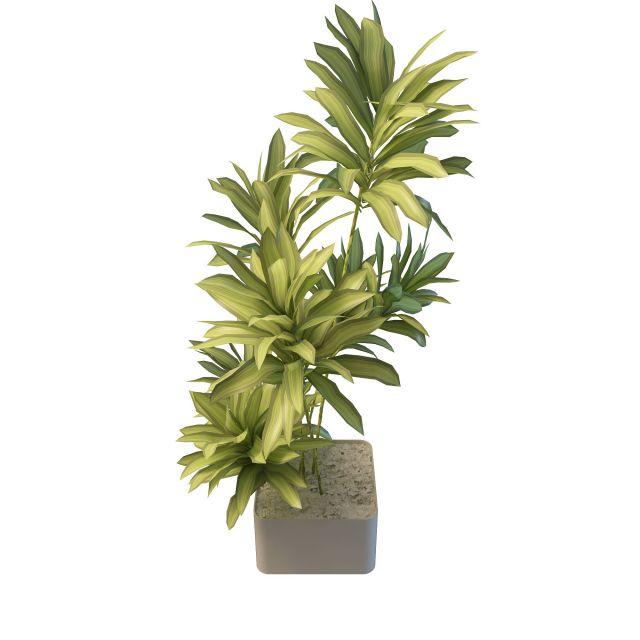 Long Leaf Indoor Plants 3d Model 3ds Max Files Free