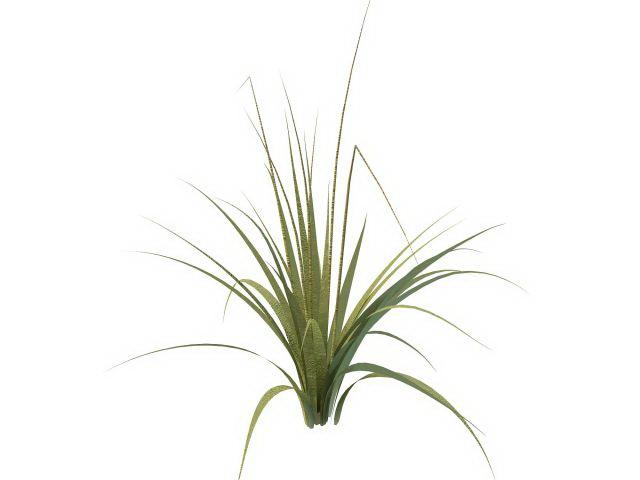 tall grass texture. Tall Grass Plants 3D Model Texture