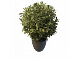 Potted ficus plant 3d model