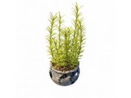 Potted herb plants 3d model
