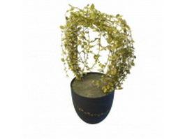 Winter jasmine vine 3d model