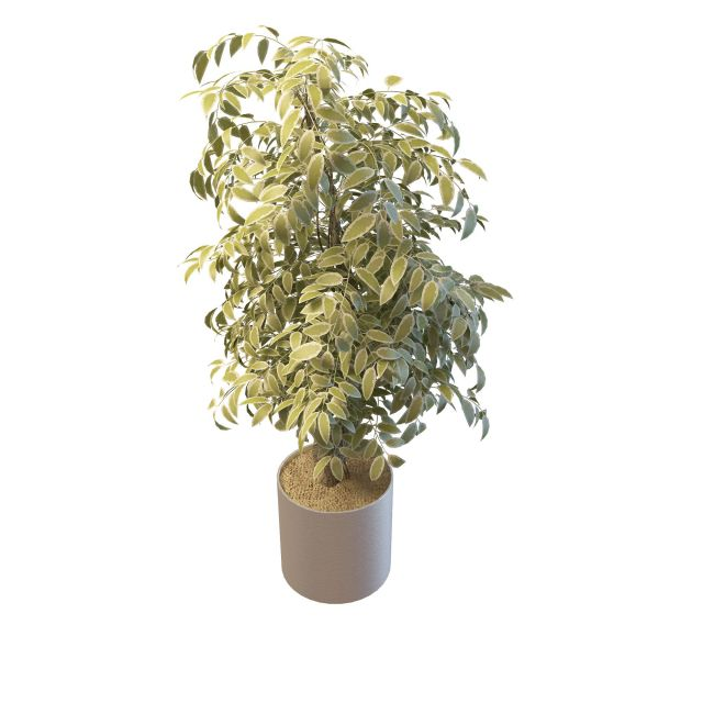 Variegated Leaf House Plant 3d Model 3ds Max Files Free