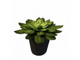 Potted succulent plant 3d model