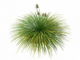 Mexican feather grass 3d model