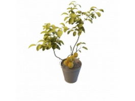 Potted apricot plant 3d model