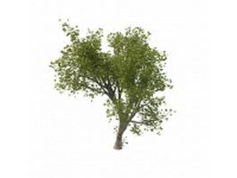 Green maple tree 3d model