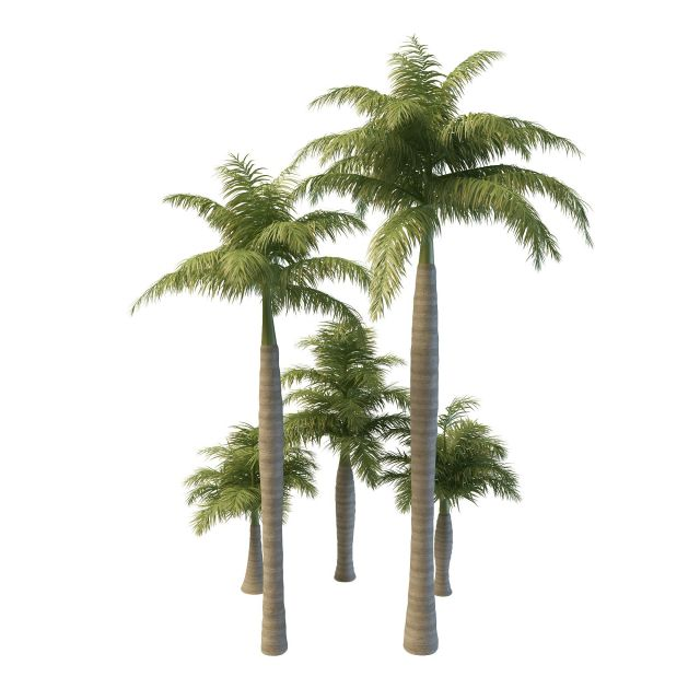 Royal palm trees 3d model 3ds max files free download - modeling ...