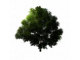 Mahogany tree 3d model