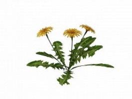 Marigold plant 3d model