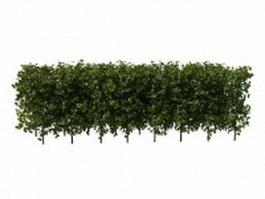 Boxwood hedge plants 3d model