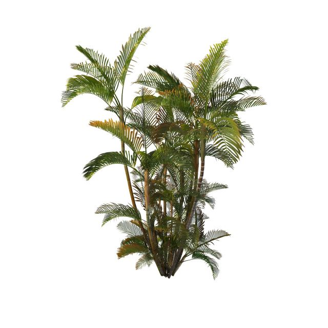 Areca Palm Plant 3d Model 3ds Max Files Free Download