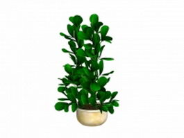 Evergreen potted plant 3d model