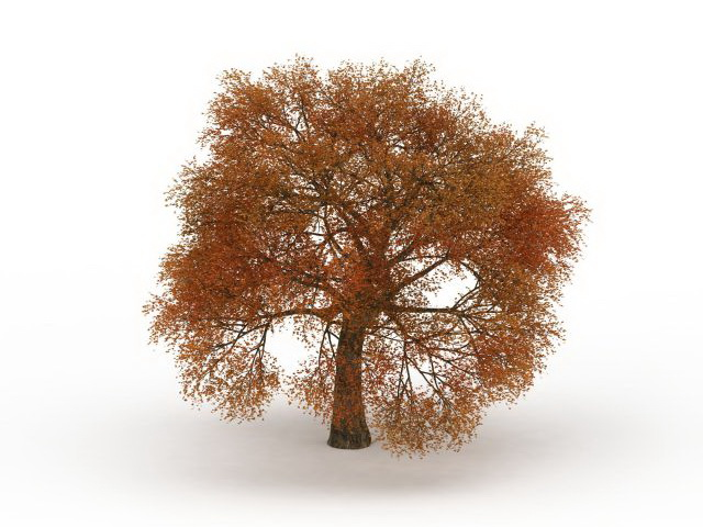 Fall Leaves Autumn Tree 3d Model 3ds Max Files Free