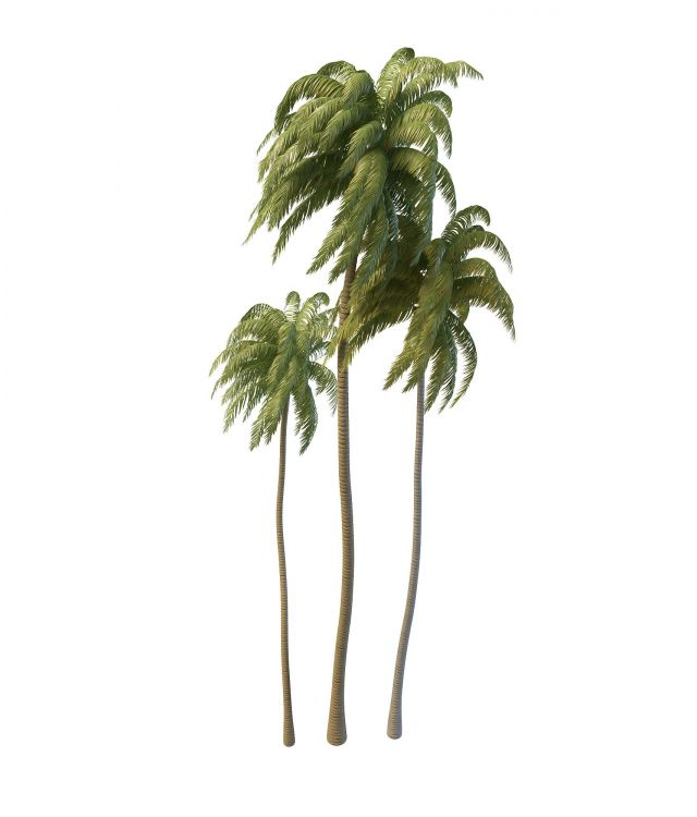 Tall coconut palm trees 3d model 3ds max files free download