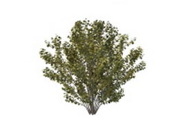 Tall shrubs for landscaping 3d model