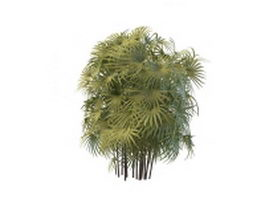 Palm bamboo plant 3d model