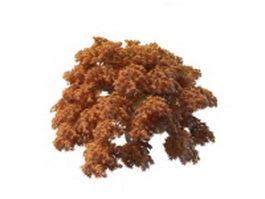 Japanese maple trees 3d model