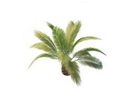 Phoenix Canariensis palm tree 3d model