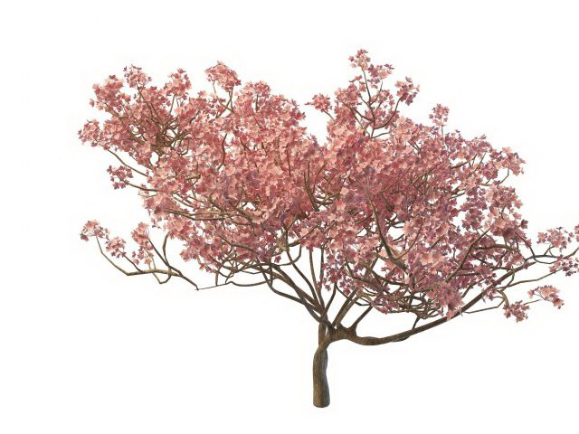 Blooming Peach Tree 3d Model 3ds Max Files Free Download
