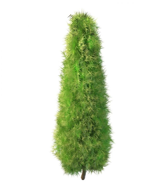 Italian Cypress Tree 3d Model 3ds Max Files Free Download