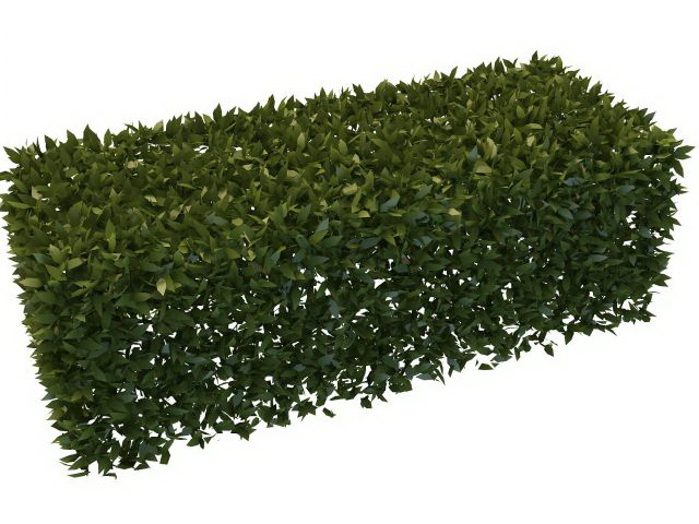 Boxwood Hedge Plants 3d Model 3ds Max Files Free Download