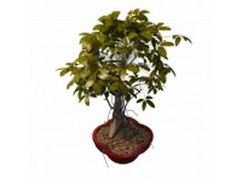 Indoor bonsai tree 3d model