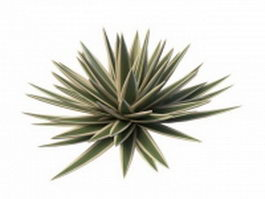 Large agave plants 3d model