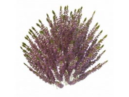 Calluna heather plant with flowers 3d model