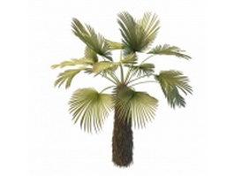 Trachycarpus palm tree 3d model