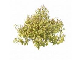 Berry shrubs 3d model