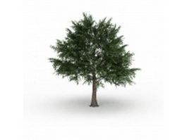 Acer platanoides tree 3d model