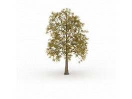 European ash tree 3d model