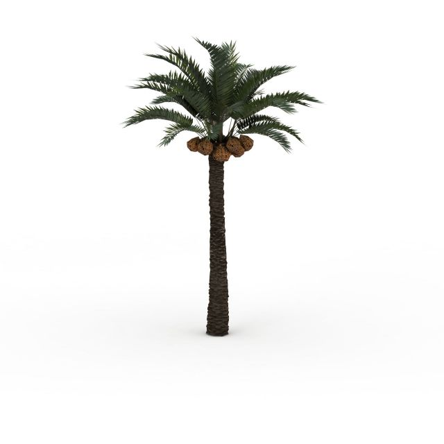 Date palm tree 3d model 3ds max files free download - modeling 30144