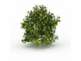Evergreen vines 3d model