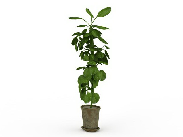 3d model of tall house plants in pot available 3d file format max 3d studio max 2010 v ray render texture format jpg