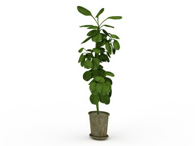 tall potted plant model max files free download modeling - Tall Potted Plants