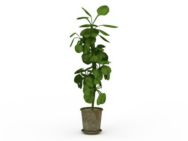 Tall Potted Plant 3d Model