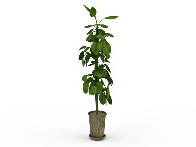tall potted plant 3d model - Tall Potted Plants
