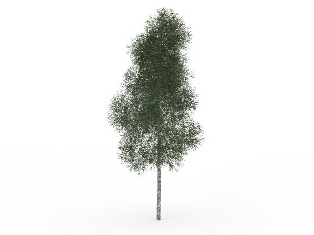 Mountain Paper Birch Tree 3d Model 3ds Max Files Free