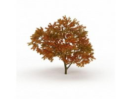 Fall color tree 3d model