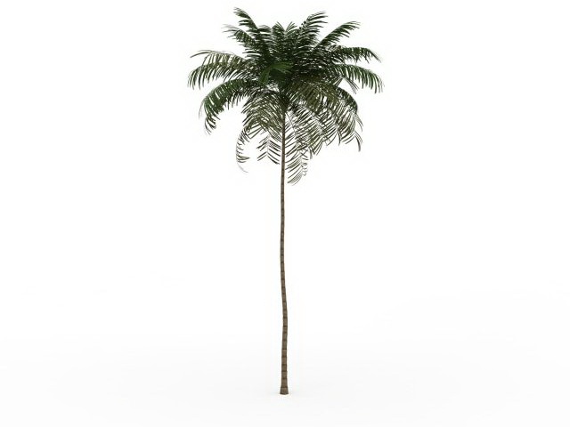 Tall Thin Palm Tree 3d Model 3ds Max Files Free Download