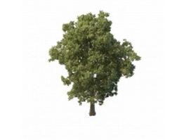 Summer tree 3d model
