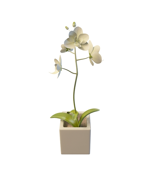 White Flower Pot 3d Model 3ds Max Files Free Download Modeling