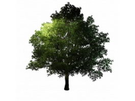 Large generic tree 3d model